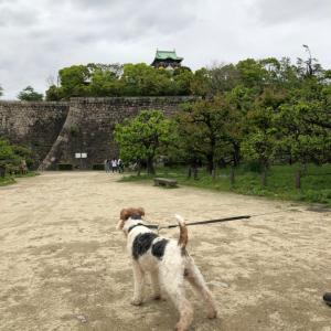 平成最後のお散歩は、