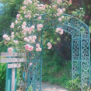 【ローズガーデンではソーシャルディスタンスも楽々クリア?】今、薔薇が満開です