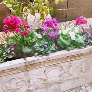 【中庭のお花がきれいになりました】事務長さんがきれいなお花を植えてくれました!