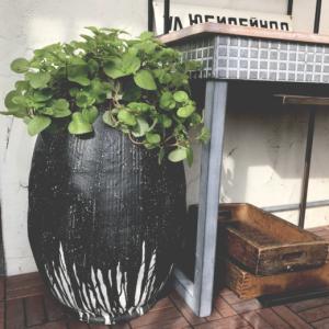 【明日3日より通常オープン10:30-17:00】玄関のアプローチやリビングのインテリアとして手軽にお楽しみいただけます◎お手持ちの植物の表情を変えたい人にもオススメ◎