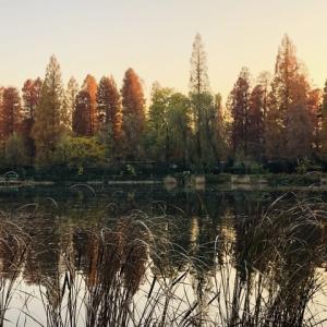 井の頭公園の晩秋の夕暮れ