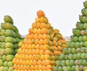 果物の美味しい季節@デリー