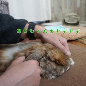 ウサギあるある~♪