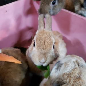 """""""ウサギさんの今後の予定"""""""