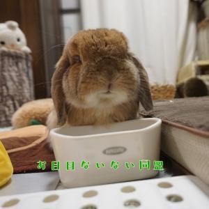 """""""本物のスフィンクス"""""""