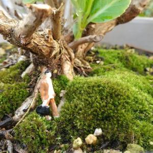 苔と ジオラマ人形♪