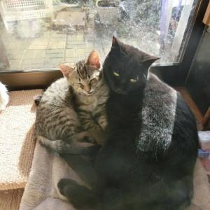 増殖する黒猫