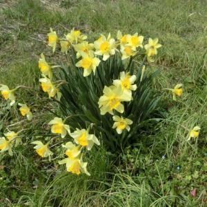 春本番ですね