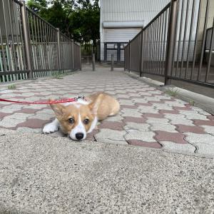 お散歩デビューしました♪