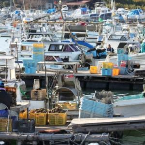 冬の漁港にて‥③