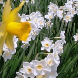 白と黄色の競演‥②