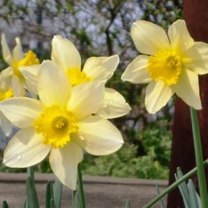 春は、すぐそこまで・・・