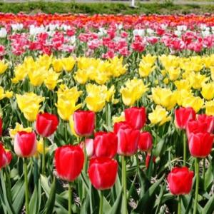 (^^♪ 並んだ 並んだ 赤 白 黄色・・・