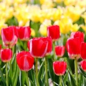 (^^♪ 並んだ 並んだ 赤 白 黄色・・・②