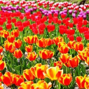 (^^♪ どの花見ても きれいだな・・・