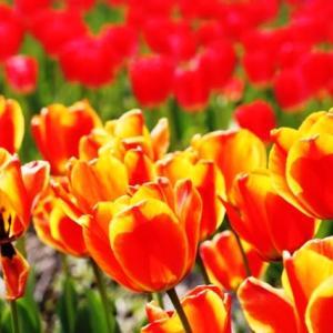 (^^♪ どの花見ても きれいだな・・・②