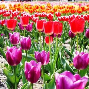 (^^♪ どの花見ても きれいだな・・・④