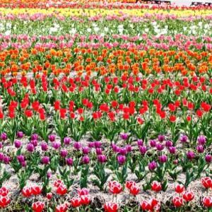 (^^♪ どの花見ても きれいだな・・・⑤