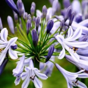 さわやかな涼感のある花‥⑦