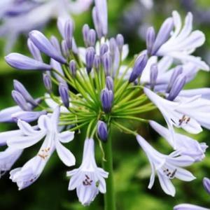さわやかな涼感のある花‥⑧