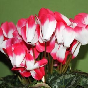 清(すが)しい花