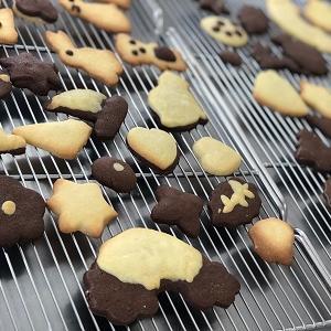 ★秋の子どもお菓子教室「型抜きクッキー」を開催しました。