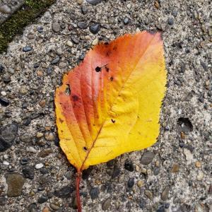 冬の落ち葉🍂
