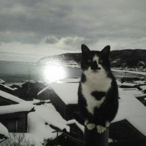 2月の猫 ~のら~