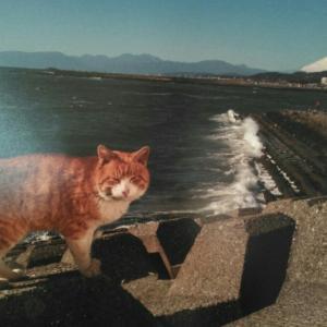 3月の猫 ~ボス猫~