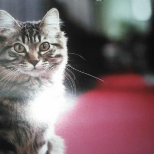 2月の猫 ~猫どころ~