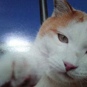 7月の猫 ~猫どころ~