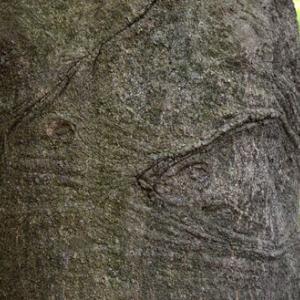 動物樹「寄り添う二匹の魚」
