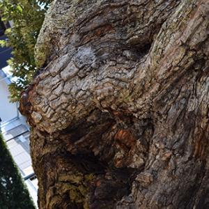 動物樹「トラ」