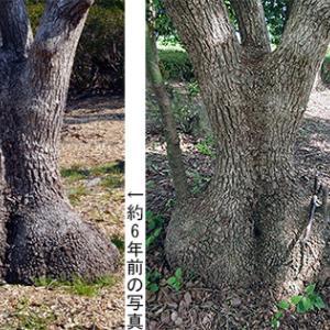 人体樹「女性の後ろ姿」