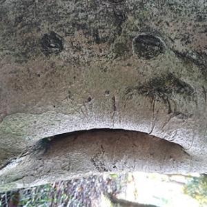 動物樹「アンコウ」