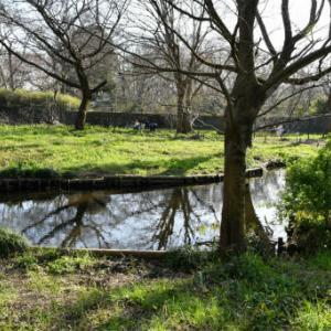 墓参りと野川公園自然観察センター3=観察センター