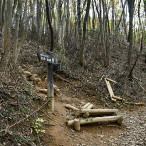 伊豆ヶ岳登山2=五輪山から男坂へ