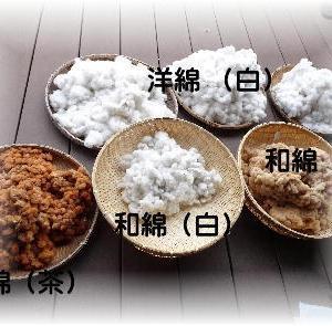 ◆ 綿の収穫が終わりました……第13期生 ◆