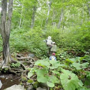 孫たちと真夏の渓流釣りで大漁。