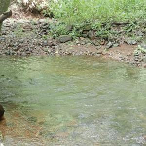 お盆過ぎ、旬のヤマベ釣りとタモギダケの終わり