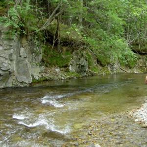 源流域に遡上する大型魚の群れ