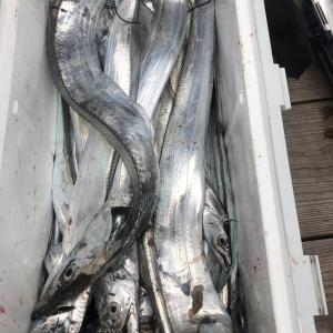 10月23日 太刀魚 seikou