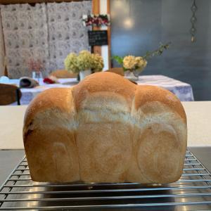 食パンに萌え〜