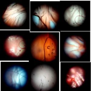 創作実験クラブ / 1日目 小さな世界の観察:顕微鏡を作ることから