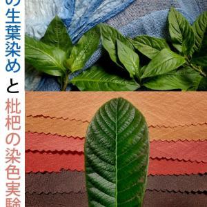 ご案内【 藍の生葉染めと枇杷の染色実験 】