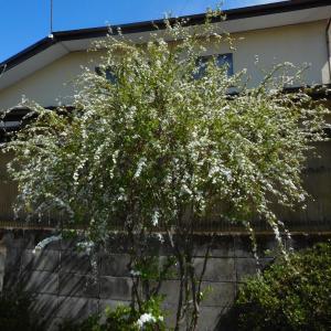 平成31年4月28日(日)那須なかがわ花遊園の花たち