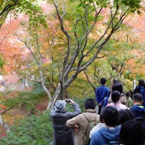 京都(一休寺~東福寺~南禅寺~嵐山」・渡月橋~夕食(京野菜と鶏すき鍋)