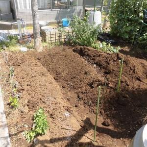これから草取りが大変  我が家の小さな畑も夏バージョンに変身