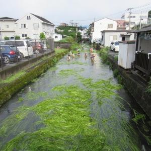 約40cmの水位低下! 集中豪雨が懸念される中、晴れ間を縫って田宿川の川そうじ
