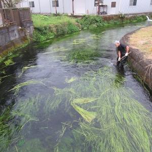 これまでになく水位が高い田宿川  2ヶ月ぶりの川そうじ
